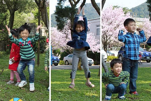 陽明山櫻花7