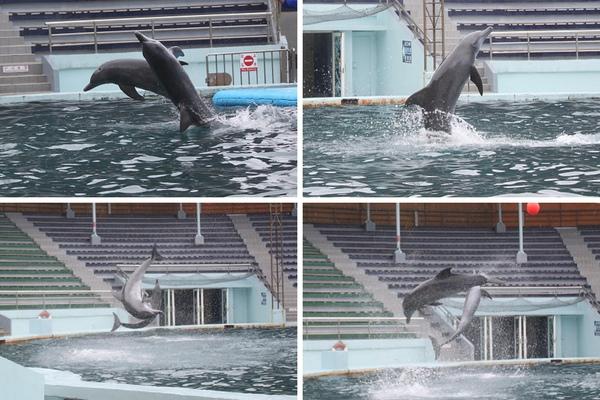 海豚.jpg