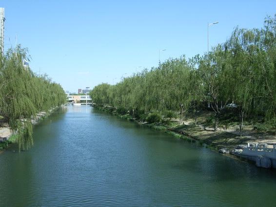 0421 適合乘涼的水邊樹景