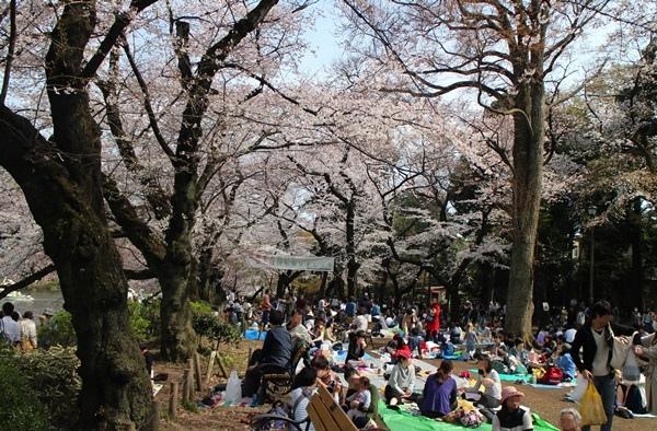 0331井頭恩賜公園 (7).JPG