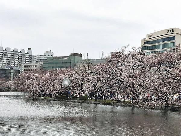 0401-上野公園 (13).JPG