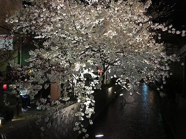 0402-白川夜櫻 (1).JPG