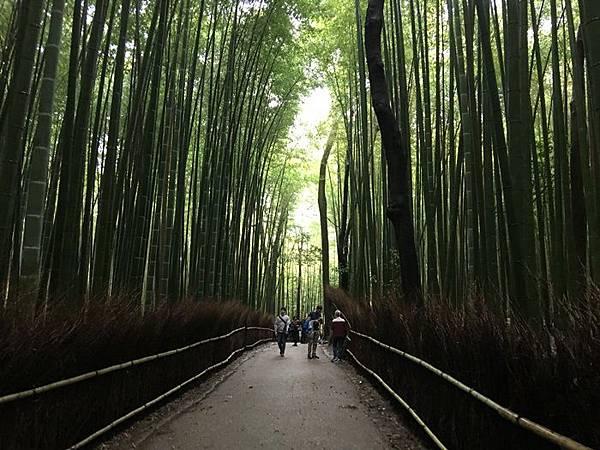 0404-嵐山竹林 (7).JPG