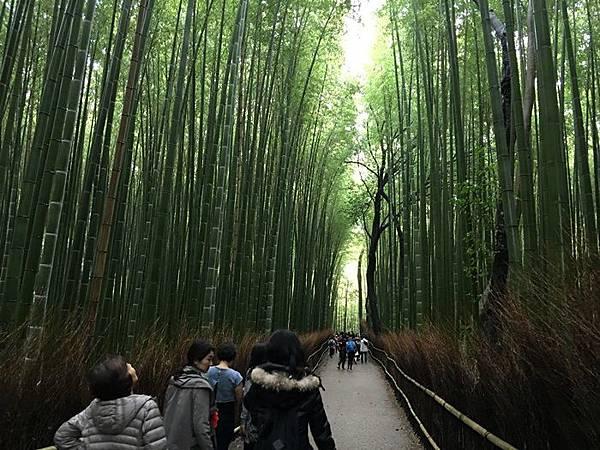 0404-嵐山竹林 (3).JPG