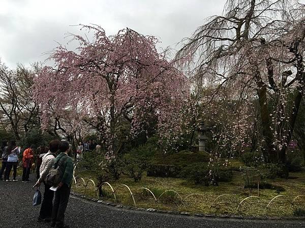 0404-嵐山天龍寺 (6).JPG