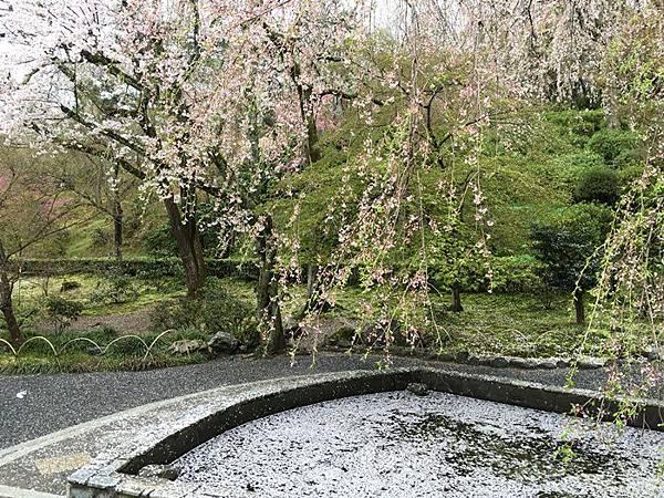 0404-嵐山天龍寺 (4).JPG