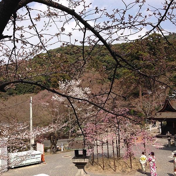 5清水寺 (6).JPG