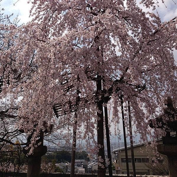 5清水寺 (4).JPG