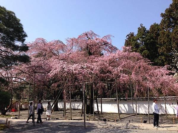 2014醍醐寺 (15).JPG