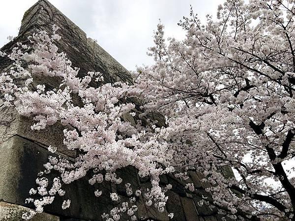 0403-大阪城 (1).JPG