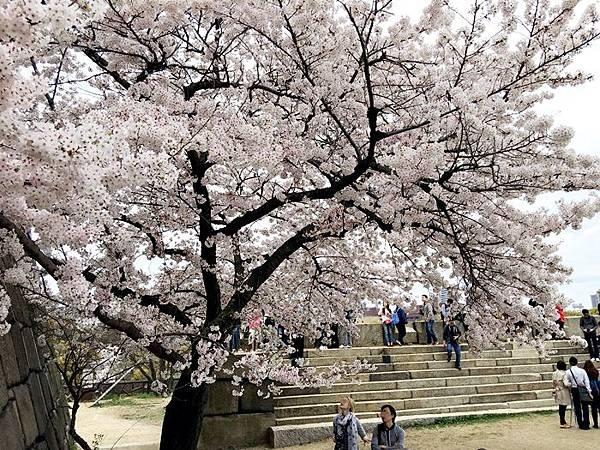 0403-大阪城 (7).JPG