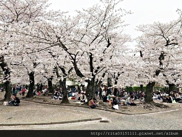 松本城13.jpg