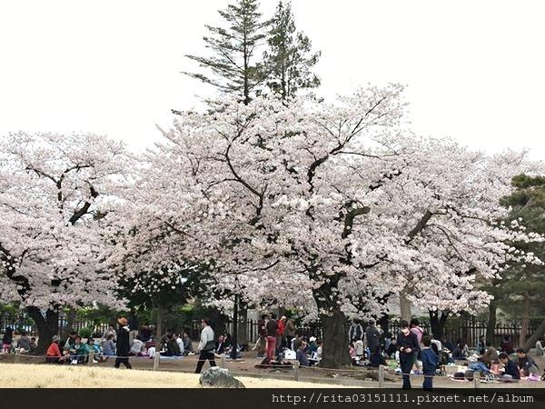 松本城12.jpg