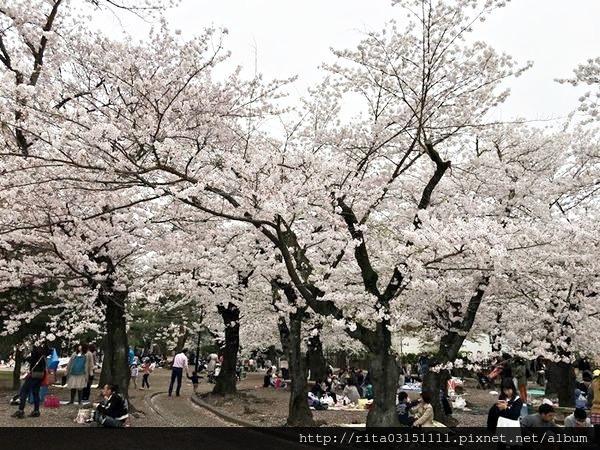 松本城14.jpg