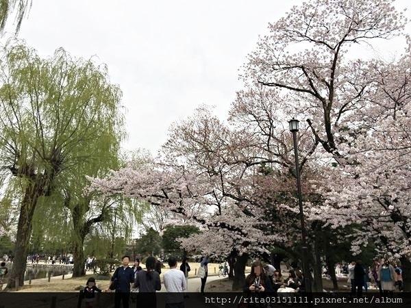 松本城15.jpg