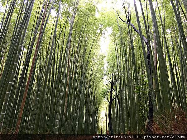1.嵐山竹林修 IMG_5922.jpg