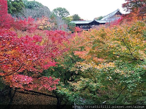 IMG_7255東福3.jpg