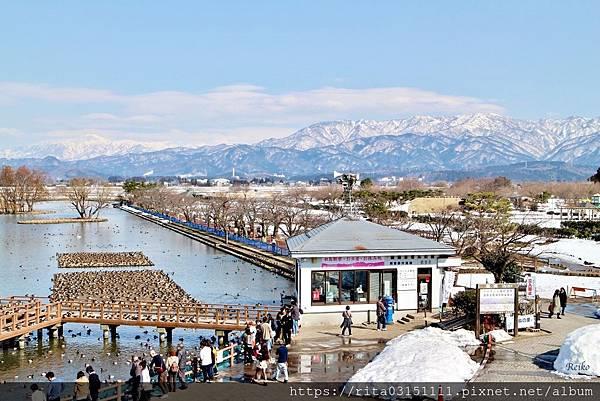 1.瓢湖6174645776_IMG_5947.jpg