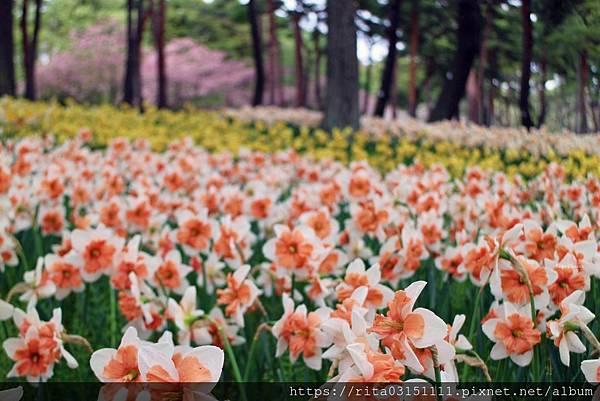 水仙-batch_6176660128_IMG_4570-07.jpg