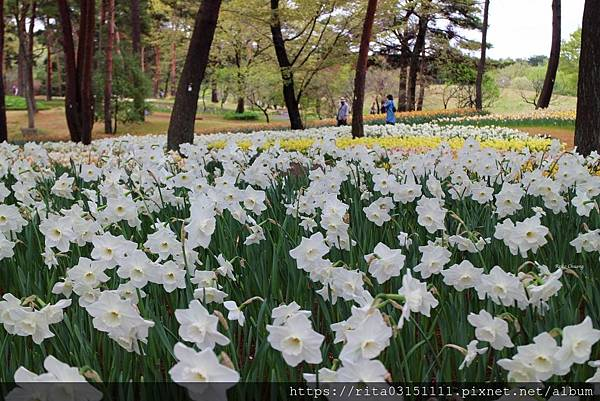 水仙-batch_6176660128_IMG_4579-14.jpg