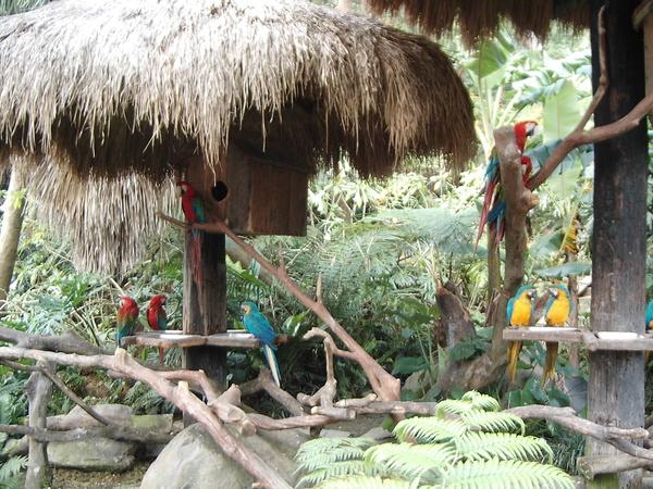 鸚鵡Part 2