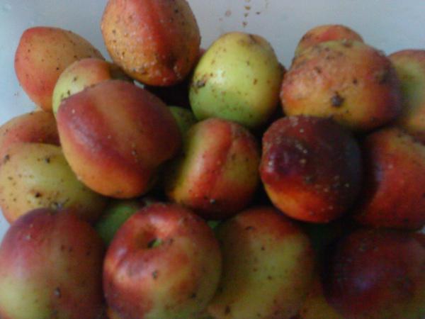 醃製好的小桃子