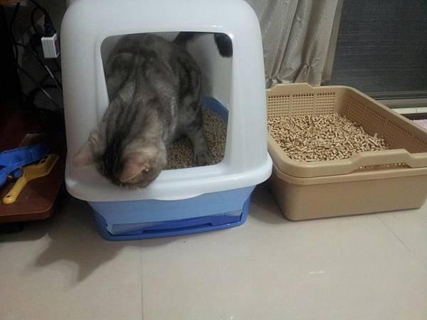 雙層貓沙盆1.jpg