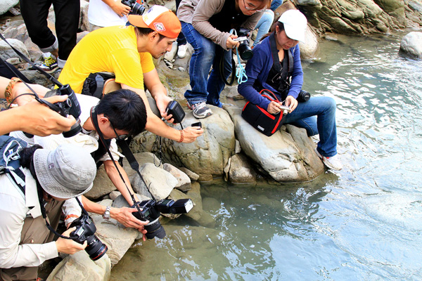 部落客們拍攝鯝魚