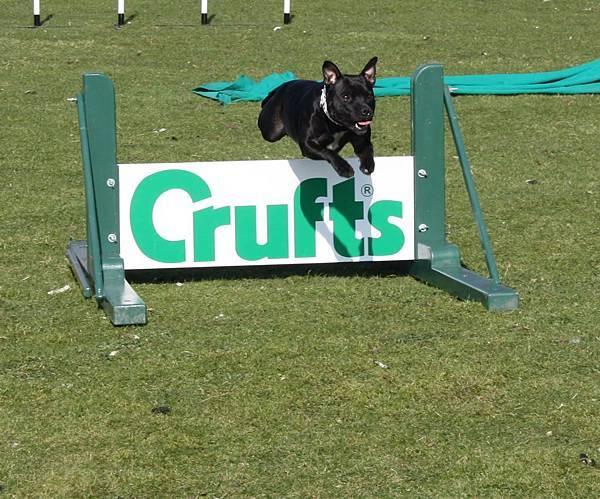 Crufts_agility