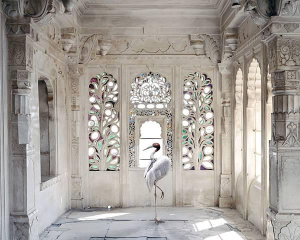 karen-knorr-photography-animals-chicquero-a-place-like-amravati-udaipur-city-palace-udaipur