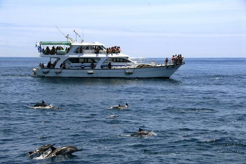 龜山島鯨豔奇航