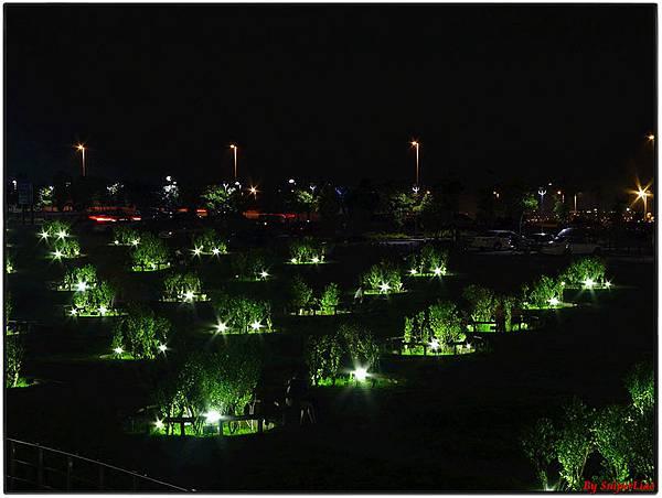 清水休息站-花圃