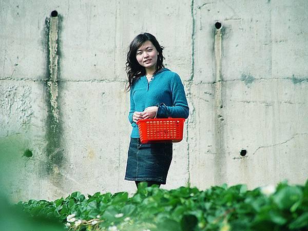 Vicki採草莓