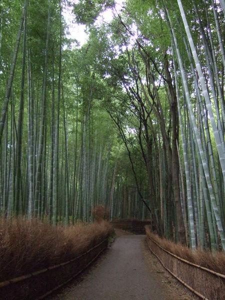 嵐山的竹林
