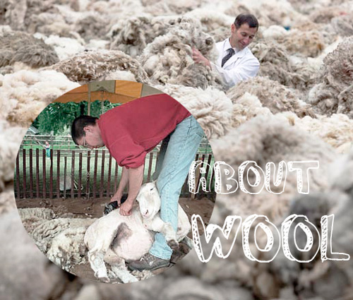 羊毛申論題(上)