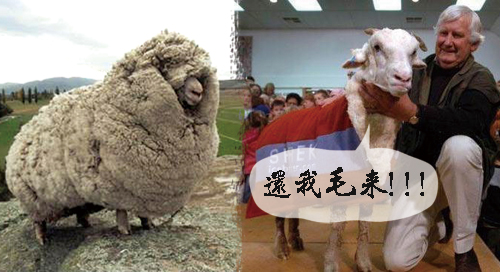 1.羊毛申論題(下)_喂~把我的毛還給我!