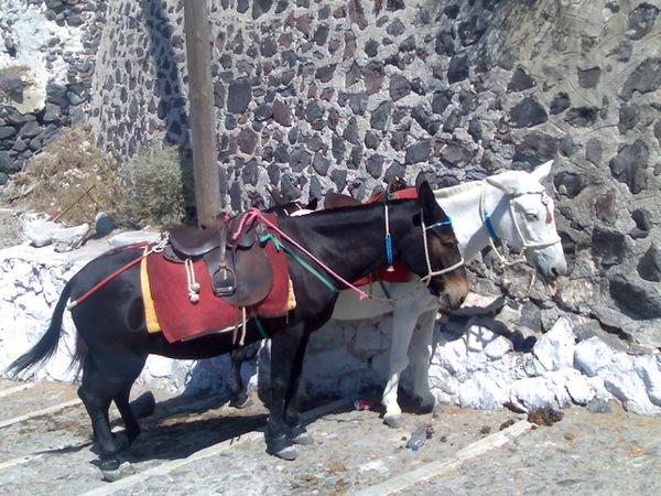 Fira的驢