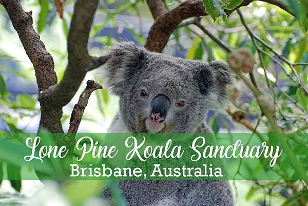 Lone-Pine-Koala-Sanctuary-1024x683.jpg