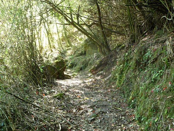 鹿林山步道
