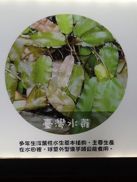 20161228_板橋435新莊老街_161229_0081.jpg