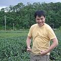 綠野仙蹤茶園採茶
