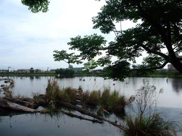 林場 (8).JPG