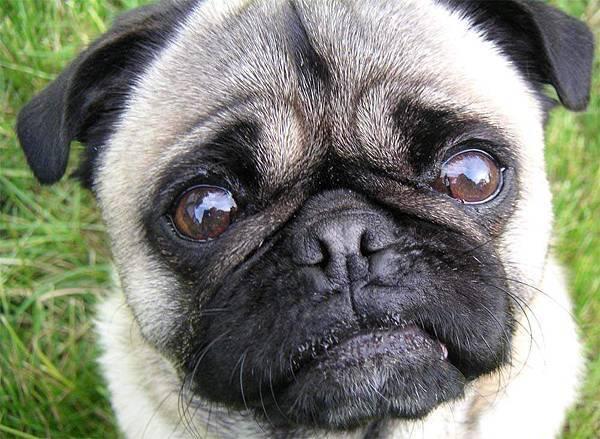 fat-dog0820a1