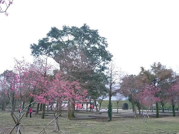 IMAG3539.jpg