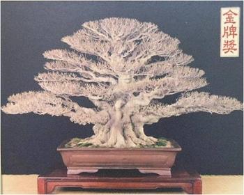 榕樹.jpg
