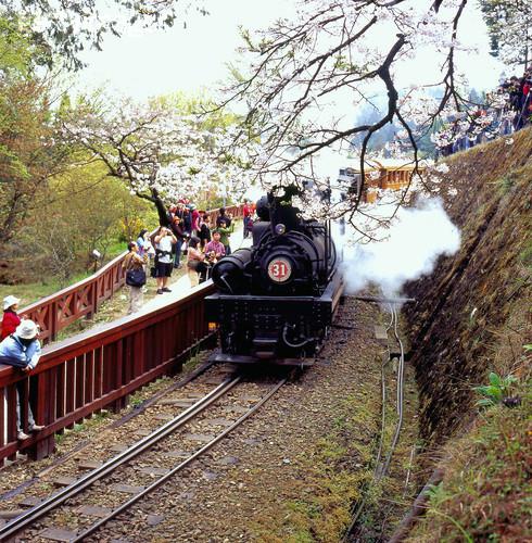 阿里山火車3