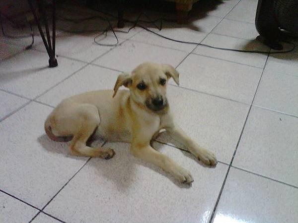 小犬2.jpg