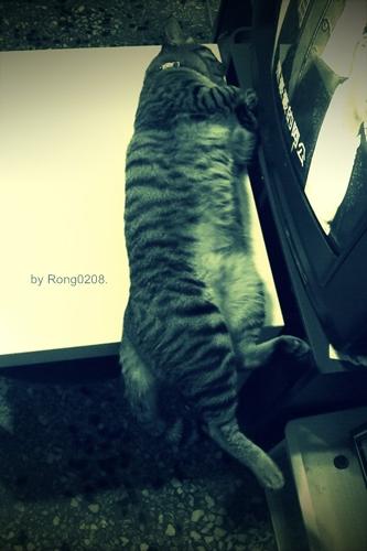 我是一條貓