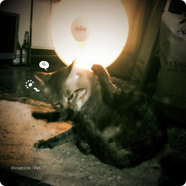 20120306貓洗澡