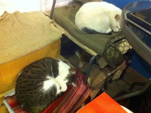 店裡面睡著好幾隻貓
